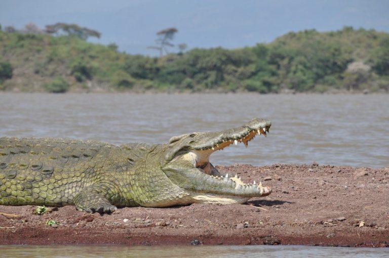 אגם צ'אמו