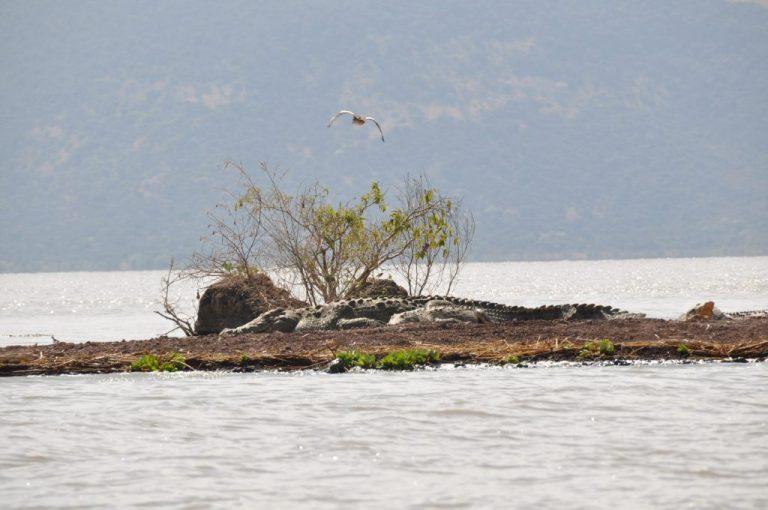 טיול לאגם צ'אמו אתיופיה