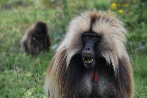 אקו טרק באתיופיה