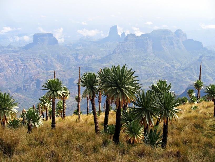 טרק לבד באתיופיה